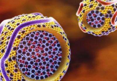 La importancia de aumentar nuestros niveles de colesterol