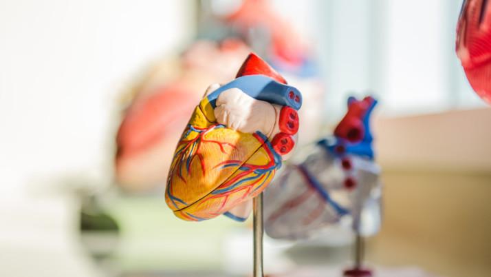«El corazón tiene cerebro» entrevista a Anna Marquier