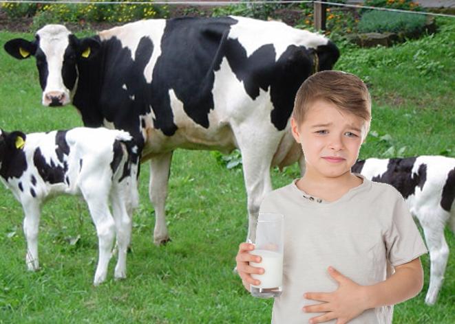 ¿Es la leche animal adecuada para el consumo humano?